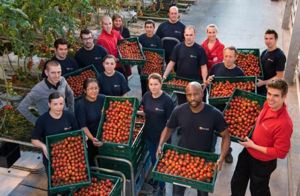 Tomatenbedrijf Beirinckx