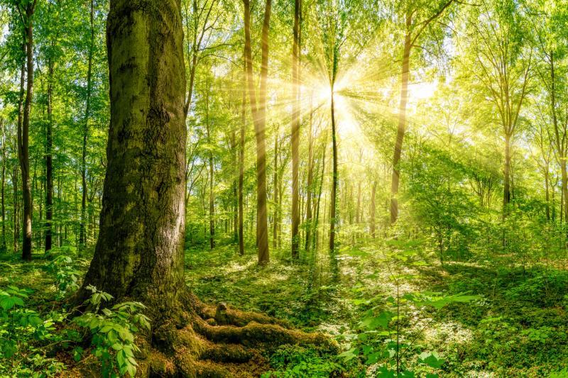 Klimaatbossenfonds: investeer mee in meer bos in het Pajottenland