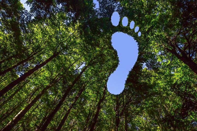 CO₂-voetafdruk van uw organisatie bepalen en resultaten interpreteren  i.s.m. Carbon+Alt+Delete