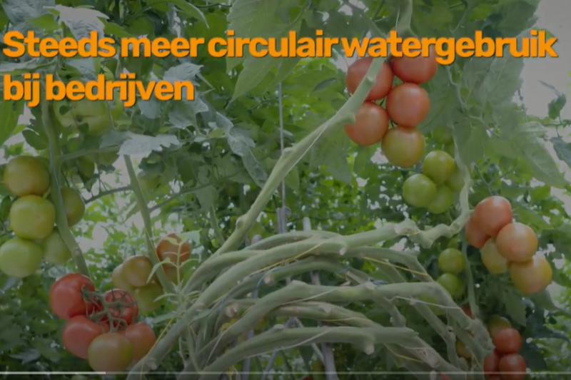 Tomato masters zet samen met Omegabaars in op circulair watergebruik